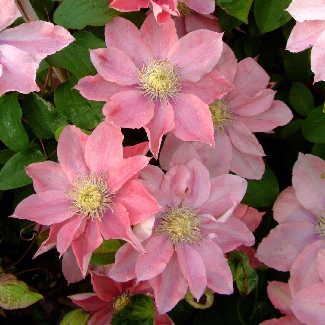 интернет магазин цветы поволжья быстрое фото для